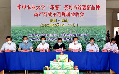 新品种助力马铃薯产业提质增效